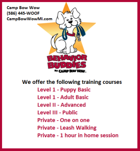 camp bow wow, saint clair shores, behavior buddies