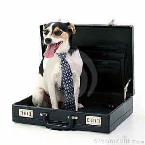 Business traveler Dog