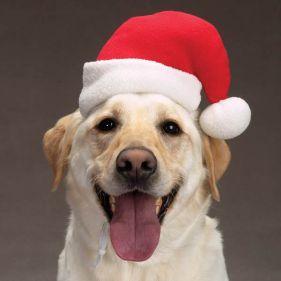 dog-santa-hat-1
