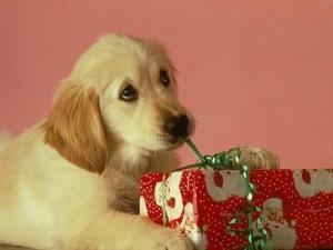 dog untying present