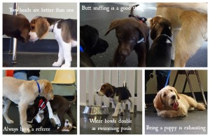 5 things we learned in puppy class