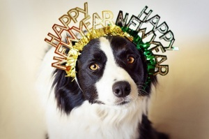 holiday-new-years-dog4