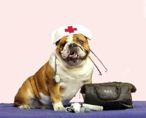 FirstAidForDog