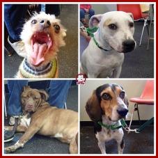 GPAAS dogs.jpg