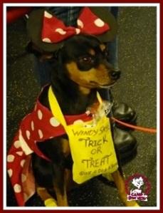 Detroit Michigan Halloween Pet Costume Contest
