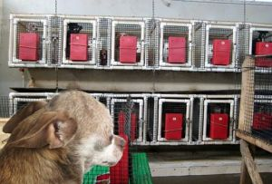 Harley, spokesdog for http://milldogrescue.org/ takes a peek inside a puppy mill in Colorado