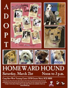homeward hound flyer
