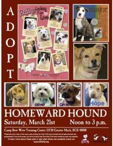 homeward hound flyer