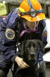 9-11 service dog