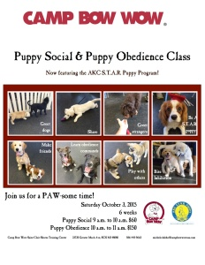 Puppy Social-Obedience Flyer 10-3-15
