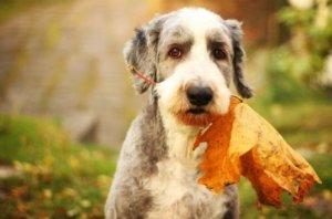 stock image-dog wtih leaf