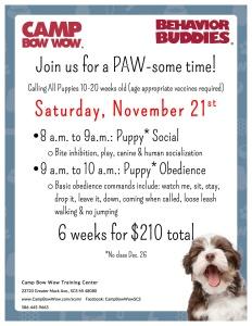 Puppy Flyer 11-21-15