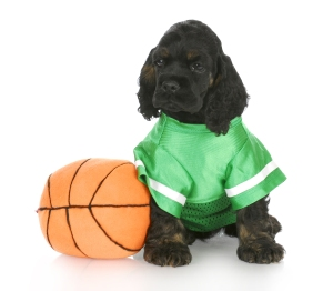 cocker spaniel puppy wearing green jersey sitting beside basketball with reflection on white background