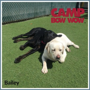cbw-scs-bailey-camper-of-the-month