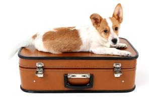 Cute dog on suitcase isolated on white background