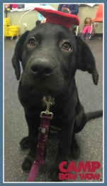 cbw-scs-puppy-classes-2