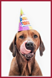 Dog celebrating birthday having a birthday party