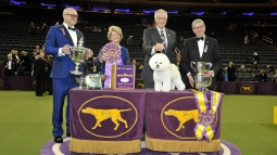 2018 Kennel Club Dog Show